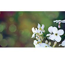 Bokeh Flowers Photographic Print