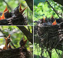 Baby Robins by emanresu