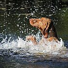 Doggy Paddle by James Hogarth