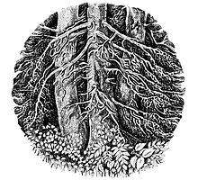 Tree by Natalie Berman