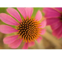 Would you like a Cone Too Photographic Print