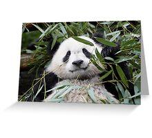 wet! wet! Panda Greeting Card