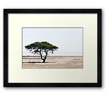 Deserted Tree Framed Print