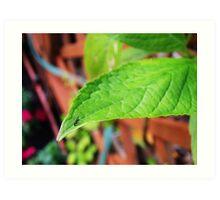 Fly on Leaf Art Print