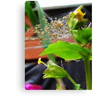 Spider World Canvas Print