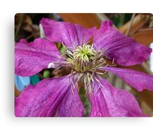 Wilting Purple Flower Canvas Print