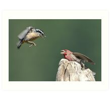 Even Beautiful Songbirds Can Use Mediation Art Print