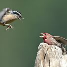 Even Beautiful Songbirds Can Use Mediation by David Friederich