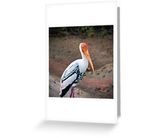 Painted Stork - Yala National Park Greeting Card