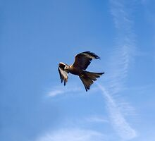 Of Kites and Chemtrails by Jay Taylor
