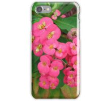 Euphorbia millii  iPhone Case/Skin