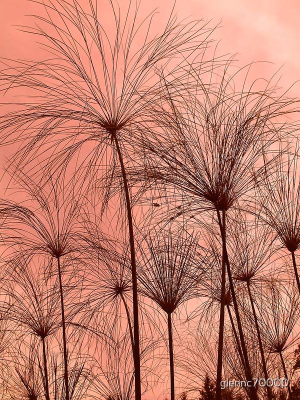 Plant Silhouettes  by Glenn Cecero