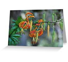 California Tiger Lily Greeting Card