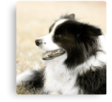Soccer Dog - border collie Canvas Print