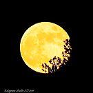 6 15 2011 Full Yellow by Katagram