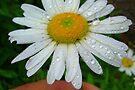 In A Summer Rain............. by Larry Llewellyn