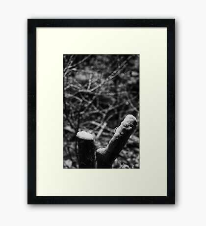 Garden Snow Framed Print