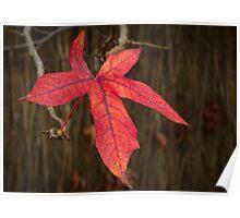 Autumn Colour 2011 Poster