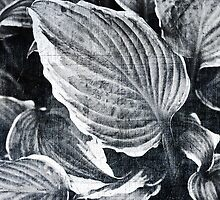 Hosta salad? by Angela King-Jones