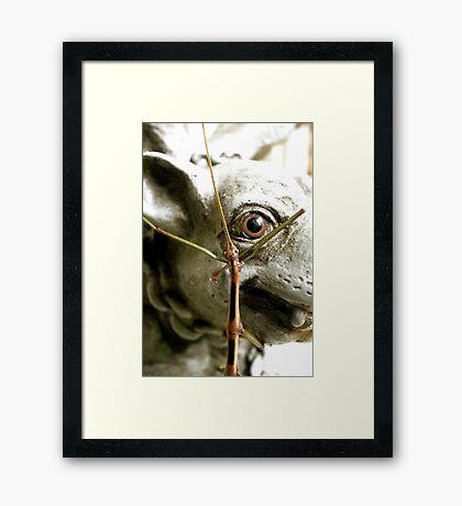 Seeing Eye to Eye Framed Print