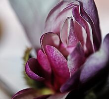 Magnolia In Bloom by Evita