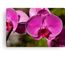 Orchid. Canvas Print