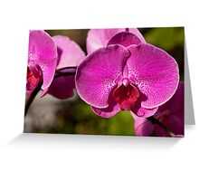 Orchid. Greeting Card
