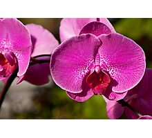 Orchid. Photographic Print