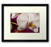 Orchid III Framed Print