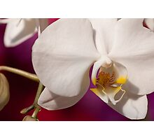 Orchid III Photographic Print