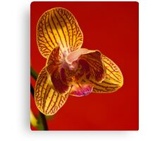Orchid IV Canvas Print