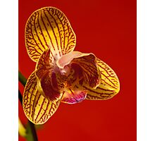 Orchid IV Photographic Print