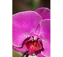 Orchid V Photographic Print