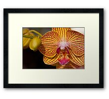 Orchid XI Framed Print