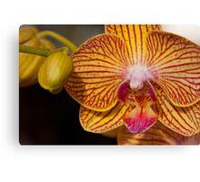 Orchid XI Canvas Print