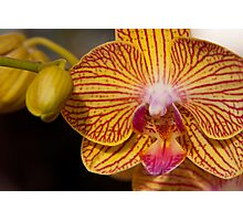 Orchid XI Photographic Print