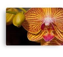 Orchid XII Canvas Print