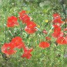 Poppy Field by rasnidreamer