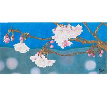 spring blossoms colored pencils drawing Photographic Print