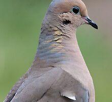 Mourning Dove Profile by DigitallyStill