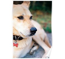 dogs, the best of best friends Poster