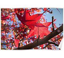 Autumn Colour 2 2011 Poster