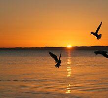 Morning Flight by sueyo