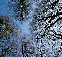 Trees And Sky at Hackpen Hill by Wolf Kettler