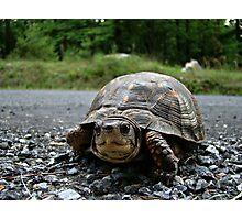 Cute Turtle~ Photographic Print
