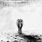 the lonely horse in snow by DeirdreMarie