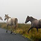 Wild Horses by DeirdreMarie