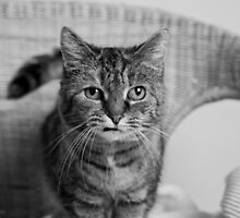 Portrait Of Holly On Wicker Chair (2) by Wolf Kettler