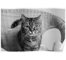 Portrait Of Holly On Wicker Chair (2) Poster