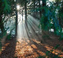 Light Streaming through the trees by Marc Garner